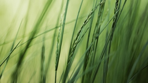Preview wallpaper background, bright, grass, green