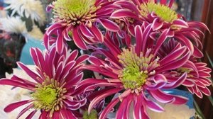 Preview wallpaper asters, bouquet, close-up, colorful, flowers