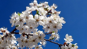 Preview wallpaper blossom, branch, clear, sky, spring