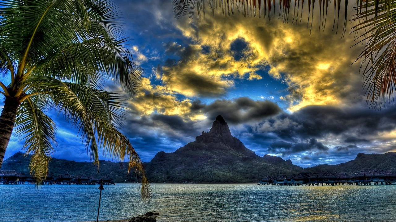 branches beach sand top mountain palm trees clouds sea