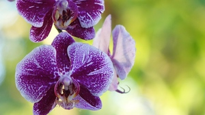 Preview wallpaper bud, flower, orchid