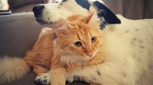 Preview wallpaper caring, cat, dog, friendship, hugs