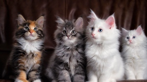 Preview wallpaper cats, colorful, cute, fluffy, kittens