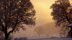 Preview wallpaper dawn, fog, frost, gleam, morning, sky, snow, sun, trees, winter, yard