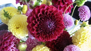 Preview wallpaper bright, buds, dahlias, different, flowers