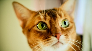 Preview wallpaper cat, color, concern, face, opinion