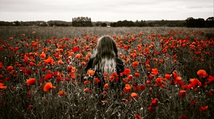 Preview wallpaper field, flowers, girl, poppies