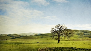 Preview wallpaper field, greens, hills, lonely, sky, slopes, summer, tree