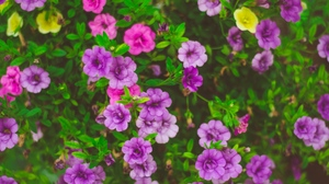 Preview wallpaper flower-bed, flowers, plants