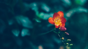 Preview wallpaper blur, flower, red, yellow