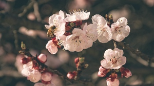 Preview wallpaper bee, bloom, flowers, pollination, spring
