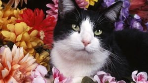 Preview wallpaper black, cat, cats, flowers, white