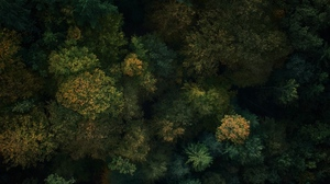 Preview wallpaper aerial view, forest, green, trees, treetops