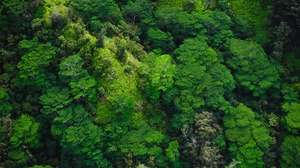 Preview wallpaper forest, green, top view, trees