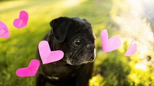 Preview wallpaper background, dog, heart