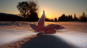 Preview wallpaper evening, frost, leaf, light, macro, sky, snow