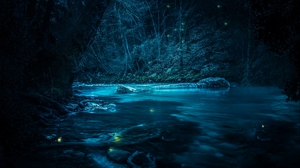 Preview wallpaper light, night, river, stones, trees