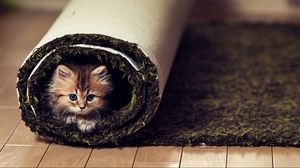 Preview wallpaper carpet, cat, fluffy, look, twisted
