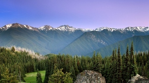 Preview wallpaper coniferous, fog, mountains, sky, sun, trees