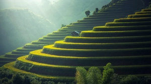Preview wallpaper agriculture, ecology, plantation, rice