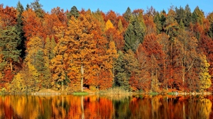 Preview wallpaper autumn, reflection, river, trees
