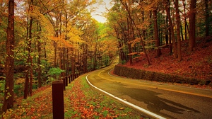 Preview wallpaper autumn, forest, road, turn
