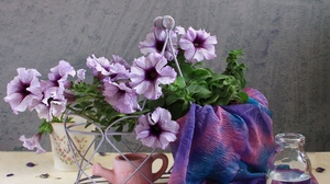 Preview wallpaper bottle, flowers, kalibrahoa, petals, scarf, water, watering can