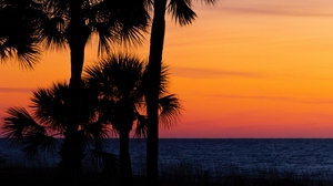 Preview wallpaper branches, dark, horizon, palm trees, sky, sunset, trees