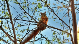 Preview wallpaper animal, spring, squirrel, tree
