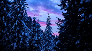 Preview wallpaper forest, sky, snow, sunset, trees