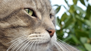 Preview wallpaper cat, muzzle, nose, tabby, whiskers