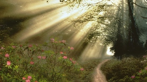 Preview wallpaper branches, flowers, footpath, light, sun rays, trees, wood