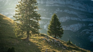 Preview wallpaper landscape, mountain, nature, slope, trees