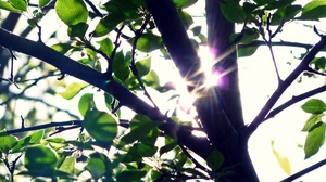 Preview wallpaper leaves, light, patches of light, tree, trunk
