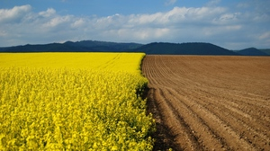 Preview wallpaper arable land, border, earth, flowers, yellow