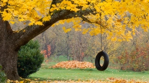 Preview wallpaper autumn, leaves, maple, rope, swing, tree, wheel