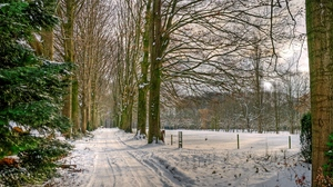 Preview wallpaper avenue, netherlands, road, snow, trees