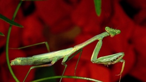 Preview wallpaper background, bright, flower, grass, mantis