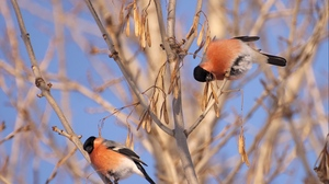 Preview wallpaper birds, branch, color, couple