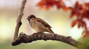 Preview wallpaper bird, branch, leaves, sparrow, tree