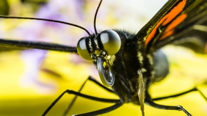Preview wallpaper butterfly, eyes, insect, macro