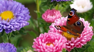Preview wallpaper bright, butterfly, flower