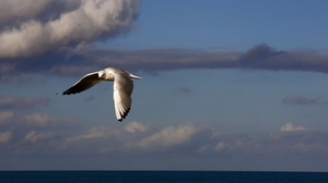 Preview wallpaper birds, clouds, flying, sea, sky