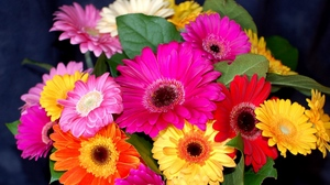 Preview wallpaper bouquet, bright, colorful, flower, gerbera