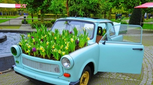 Preview wallpaper bonnet, car, daffodils, flowerbed, flowers