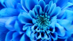 Preview wallpaper blue, flower, macro, petals