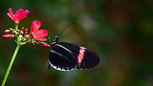 Preview wallpaper butterfly, flower, flying, patterns, wings