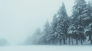 Preview wallpaper fog, snow, trees, winter