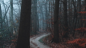 Preview wallpaper autumn, fog, forest, path, trees