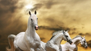 Preview wallpaper dust, freedom, grass, horse, race, sky